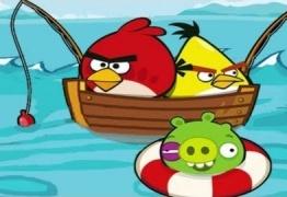 الطيور الغاضبة تصيد السمك